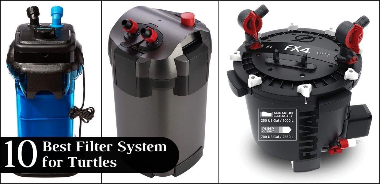 10 Best Filter System for Turtles